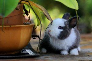 konijnensnacks
