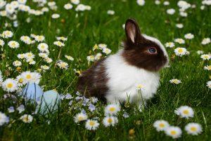 konijnenkooi