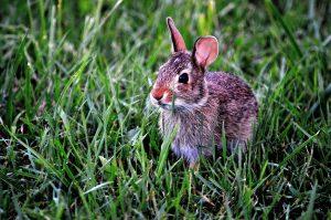 konijnenhuis