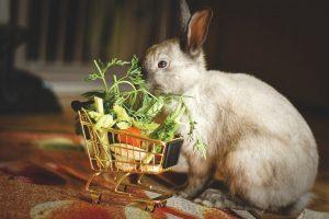 konijnen spullen