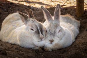 konijnenren kopen