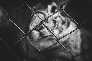 konijnen asiel