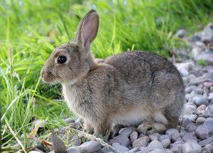 konijnen website