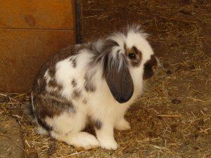 konijnenhok met ren