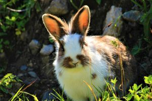 konijnen soorten
