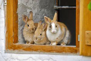 konijnenhok binnen