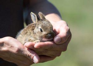 konijnen kopen