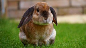 drinkbak konijnen