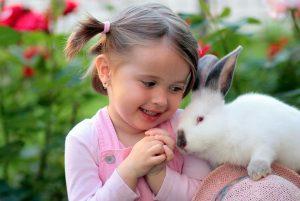 konijnen snoepjes