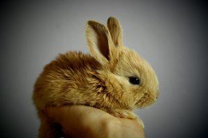 konijn tam maken